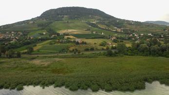 Vesztésre állnak a balatoni szőlők a méregdrága nyaralókkal szemben
