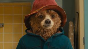 Paddington medvének öltözött kutya az Instagram sztárja