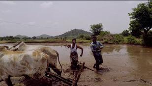 Will Smith lánchidas tánca vagy ez a két indiai farmer a menőbb?