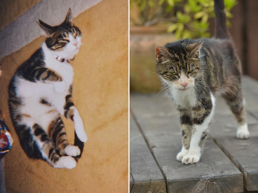 Boo 2005-ben, eltűnése előtt és most: Janet Adamowicz már lemondott róla, hogy valaha újra látja, de végül a cica 17 éves korában előkerült.