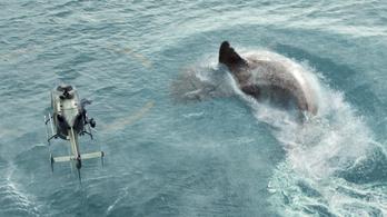 Az óriáscápa a magyar vizekben is leharapta Tom Cruise lábait