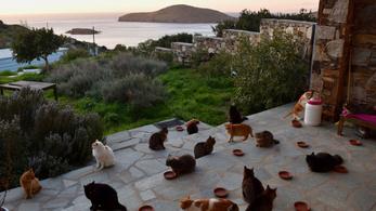 Álomállás macskarajongóknak: 55 macskára kell vigyázni egy görög szigeten