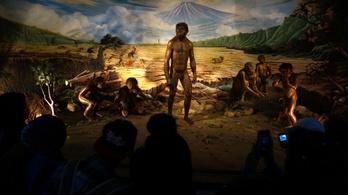 Lustasága miatt halt ki a Homo erectus