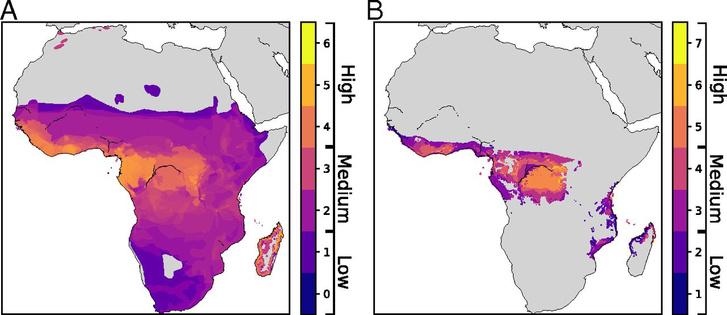 A: a veszélyeztetett fajok élőhelyei, minél sérülékenyebbek, annál világosabb a szín B: pálmaolaj-termelésre alkalmas területek az A ábrára vetítve