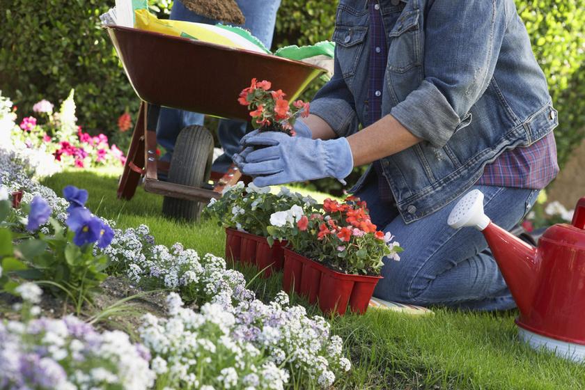 A kertészkedés nemcsak a hangulatot javítja, de az agyi funkciókat is. A gondoskodás és a természettel való érintkezés hatása az egész testen érezhető, miközben a D-vitamin-pótlást is biztosítja.