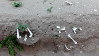 Emberi csontok hevernek szanaszét a gigantikus dabasi Jézus-szobor mellett