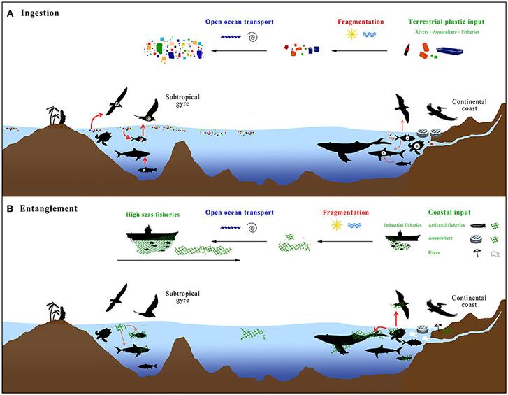 A műanyag hulladék és a halászhálók útja az állatokig