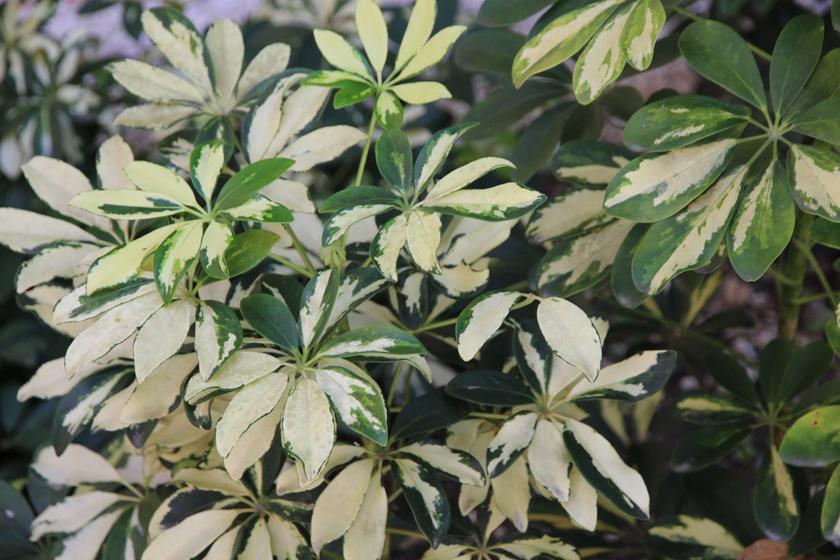 Könnyen szaporítható zöldek: ez a 9 szobanövény még a kezdő kertészeken sem fog ki