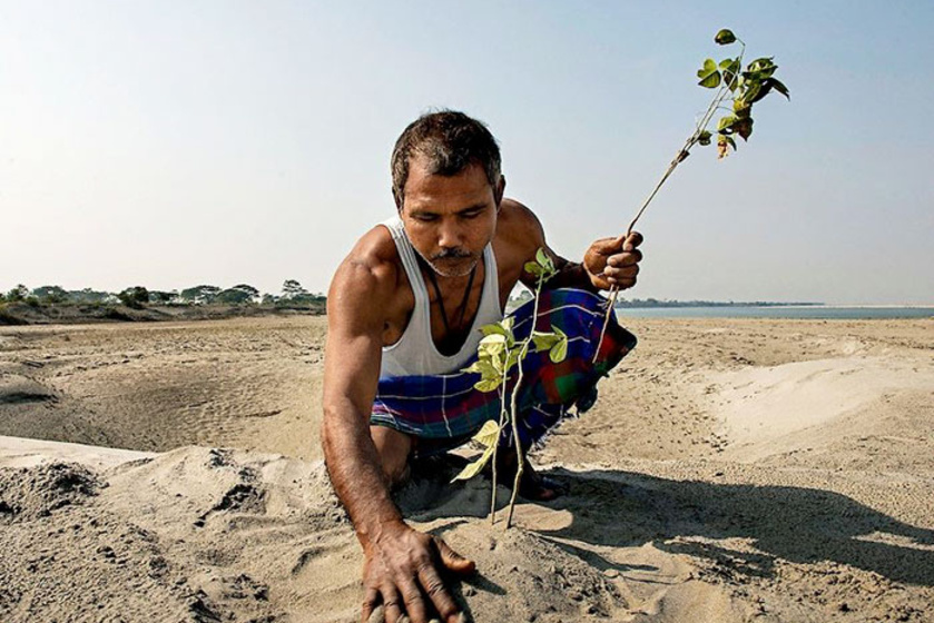 40 éve mindennap ültet egy fát a kopár szigeten: döbbenetes változást ért el