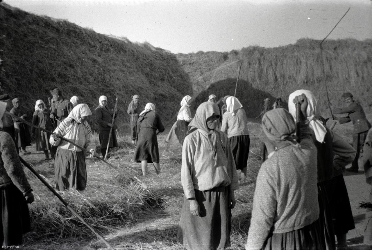 Néhány katonatárs vidáman odaszegődött a dolgozó nők közé segíteni. Ez az ukrajnai kép nem sokkal azelőtt készülhetett, hogy 1943-ban Miklós Lajos a 2. magyar hadsereggel megjárta a Don-kanyart, ahol - jól tudjuk -, rendkívül súlyos vereséget szenvedtek.Miklós Lajos nemcsak élő, de elesett bajtársairól is készített képeket. Pontosabban azok sírjáról a kopjafával. Lánya szerint a fotókat később elküldte az elhunytak családjainak, hiszen odahaza anyák és feleségek néha évekig várták a hírt a katona éltéről vagy elestéről. Néhány második világháborús hadisíron jól olvasható nevek, születési és halálozási dátumok vannak. Ezekből a képekből korábban mi csináltunk egy összeállítást.