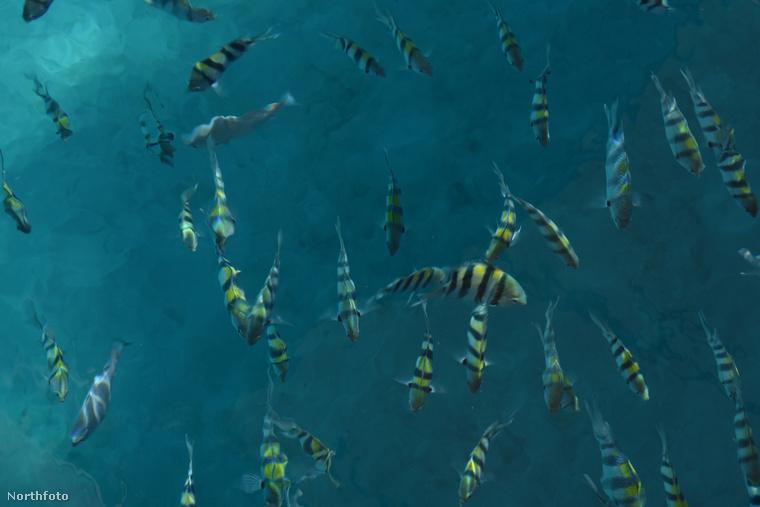 Esetleg ilyen halakkal lehet úszni.