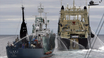 Japán 177 bálnát ölt le idén