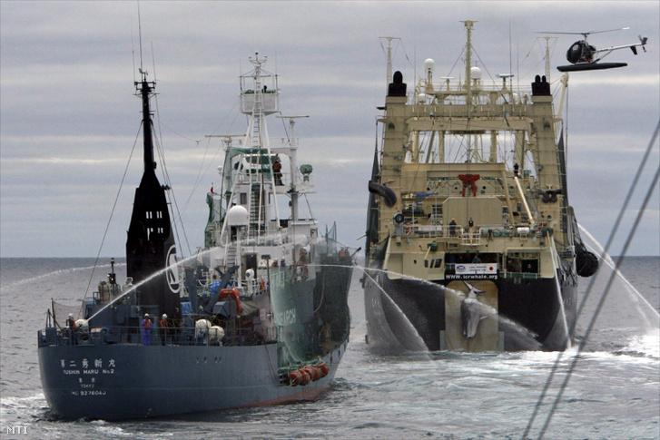 Jusin Maru 2 bálnafeldolgozó hajó és Nissin Maru bálnavadász hajó