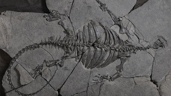 Felfedeztek egy 228 millió éves semmit