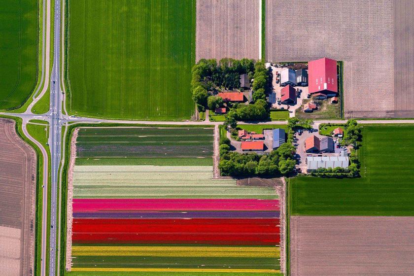 A fotós számára tavasszal egy hatalmas játékteret jelentenek a tulipánföldek.