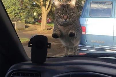 kovetkezmeny-macska