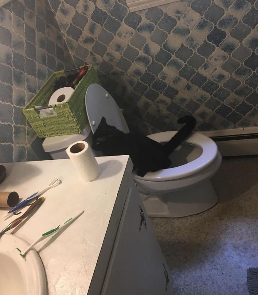 Olykor előnyös következményei is lehetnek annak, ha az ember elfelejti kicserélni a macskaalmot - bár a cica nyilván bosszúból használta a WC-t. A gazdi épp fogat mosott, amikor kedvence meglepte: tökéletes időzítés.