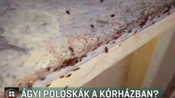 Ágyi poloskák üthették fel a fejüket a Heim Pál Kórházban