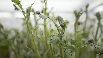Nagyon nehéz lesz elkerülni, hogy a rovarok felzabálják előlünk az élelmet
