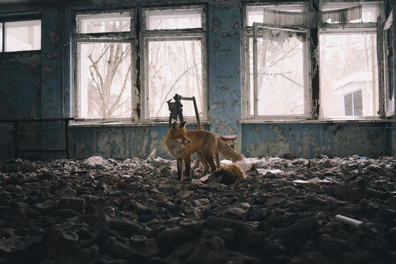 Adrian Bliss (Egyesült Királyság): Látogatás az iskolában (School visit). Vörös róka áll gyermekméretű gázmaszkok közt az egyik pripjatyi iskolában. Az ukrajnai várost 1986-ban evakuálták teljesen a csernobili atomerőmű négyes blokkjában bekövetkezett katasztrófa miatt, az elmúlt több mint harminc év alatt a természet szép lassan visszafoglalta az elhagyatott, folyamatosan omladozó épületeket. Az erőmű körül kijelölt 30 kilométeres zónába látogatók gyakran találkozhatnak többek között rókákkal, hiúzokkal, vaddisznókkal, szarvasfélékkel, annak jeleként, hogy az ember által megsebzett majd elhagyott területeket a természet bámulatos módon képes meggyógyítani.