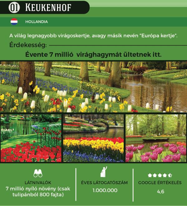 A hollandiai Keukenhofot Európa kertjeként is emlegetik, ugyanis ez a világ legnagyobb virágoskertje, ahol 800 fajta tulipán virágzik