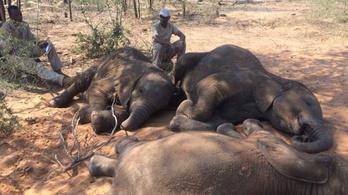 90 elefánttetemet találtak egy botswanai rezervátumban