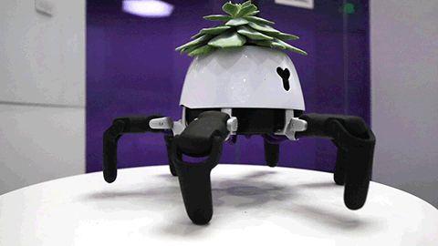 Ha pedig jól érzi magát a virágunk, a robot táncolni kezd örömében.