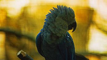 Nyolc madárfaj halt ki az elmúlt évtizedben