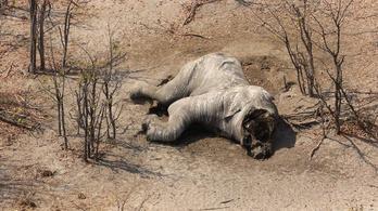 Tömeges elefántmészárlás nyomaira bukkantak Afrikában