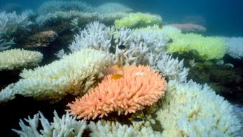 Nincs menedék, még a teljes sötétségben élő korallzátonyok is kifehérednek
