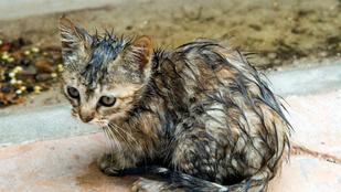 Miért gyűlölik a macskák a vizet?