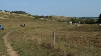 Halálra vert egy tehénpásztort egy ózdi fiú