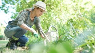 Szép kertre vágysz? Szeptemberben ezeket a munkákat érdemes elvégezni