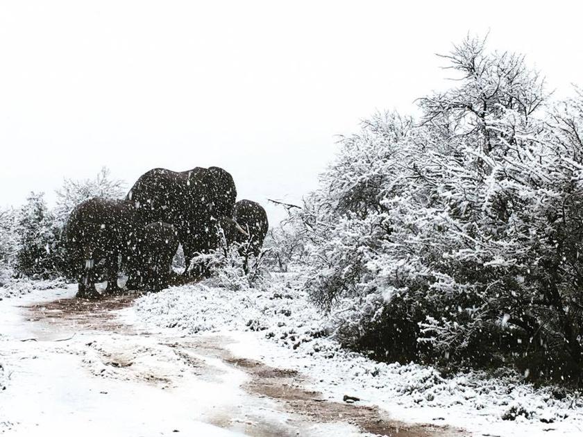Dél-Afrikában nagyjából 13 °C a téli átlaghőmérséklet, így havazásra nem gyakran van esély.