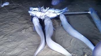 Három szörnyet találtak a tengerek mélyén