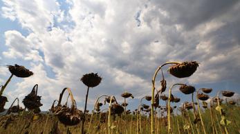 Egyre gyakoribbak lehetnek a szélsőséges nyarak Európában
