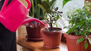 Sárgulnak a szobanövényeid levelei? Így mentsd meg őket!