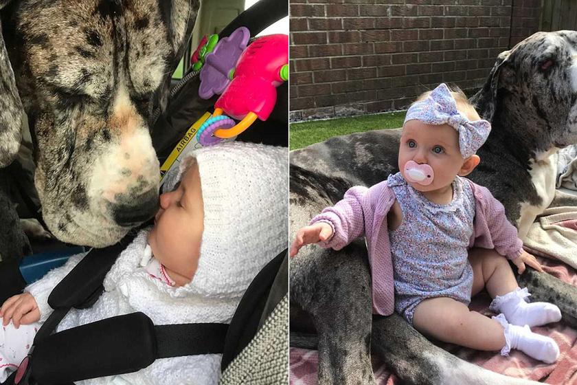 90 kilós kutya lett a pici baba legjobb barátja és védelmezője - Még a pelusát is segít kicserélni
