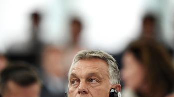 Az EP megtudta, milyen a magyar gógyi