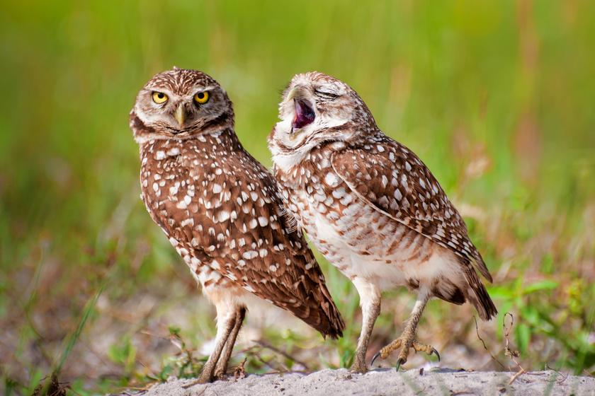 Itt vannak az év legviccesebb állatfotói: zseniális pillanatokat kaptak el a fotósok