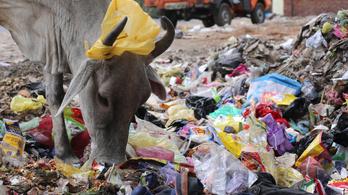 Ha a kormány bekeményít, jöhetnek a bioműanyagok