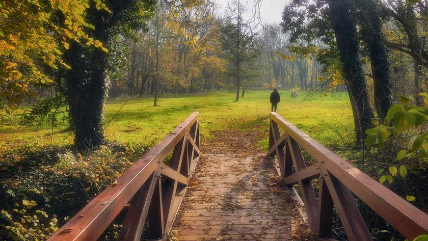 Az Alcsúti Arborétum hóvirágmezejéről és a szentjánosbogár-rajzásról híres, de őszi pompában is páratlan. Egész évben, mindennap 10 és 18 óra között tart nyitva. A belépő 1050 forint, a diákjegy 700 forint.