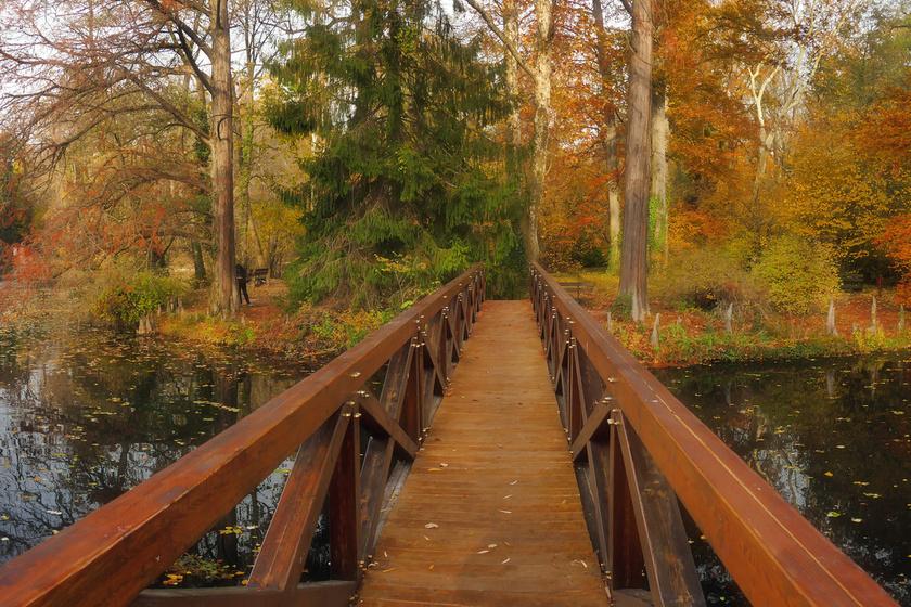 10 lélegzetelállítóan szép arborétum, amit ősszel látni kell: pompás fák alatt sétálhatsz