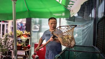 Hol a Pénz? #2 - Eldugott kincsek a budapesti Chinatownban