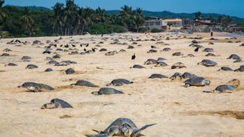 Legyőzték a teknősök a nagyberuházót