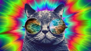 Egy kis kokainnal és heroinnal lepte meg a cica gazdáját
