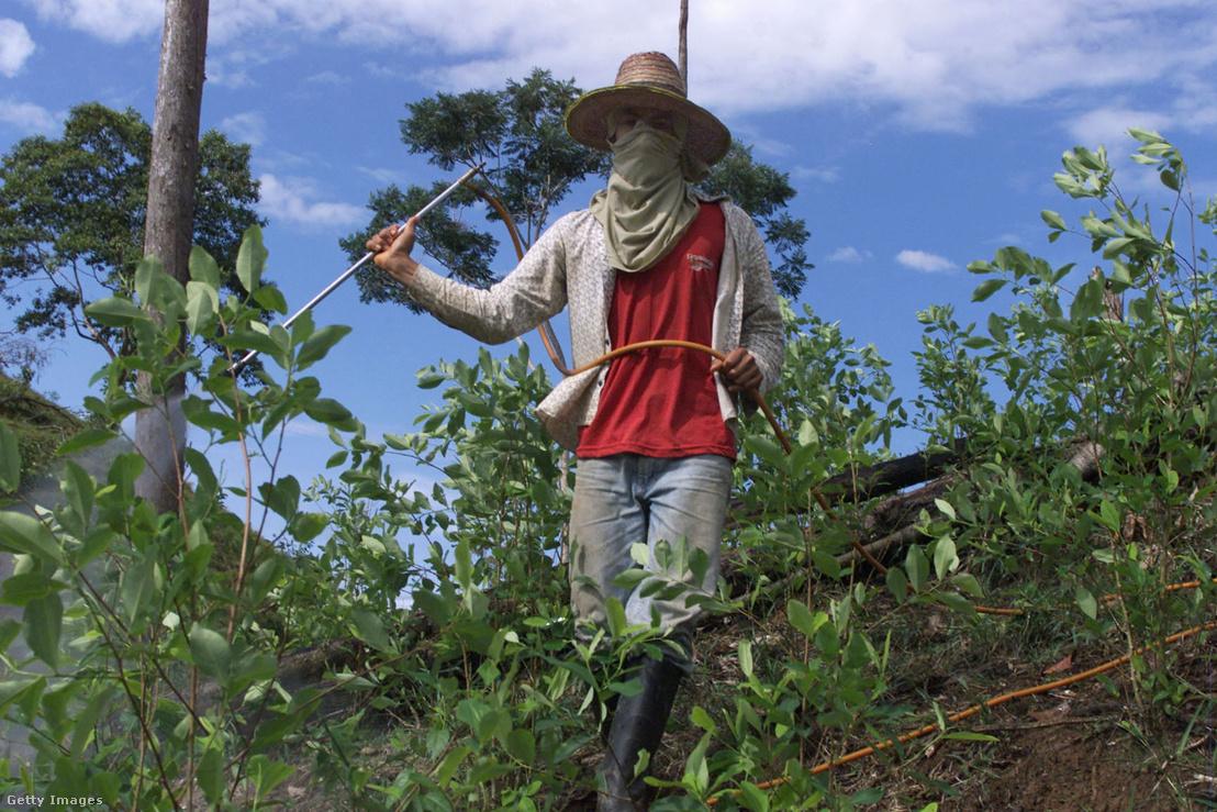 Kokaintermesztő Kolumbiában