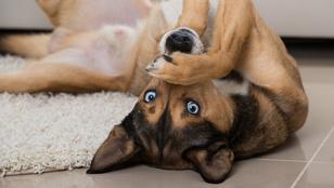 Hogyan lehet a te kutyádból is okos eb?