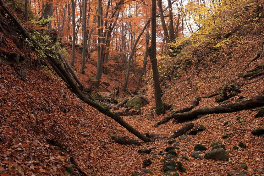 Rejtélyes völgy karnyújtásnyira Budapesttől: a Holdvilág-árok őszi túrára csábít