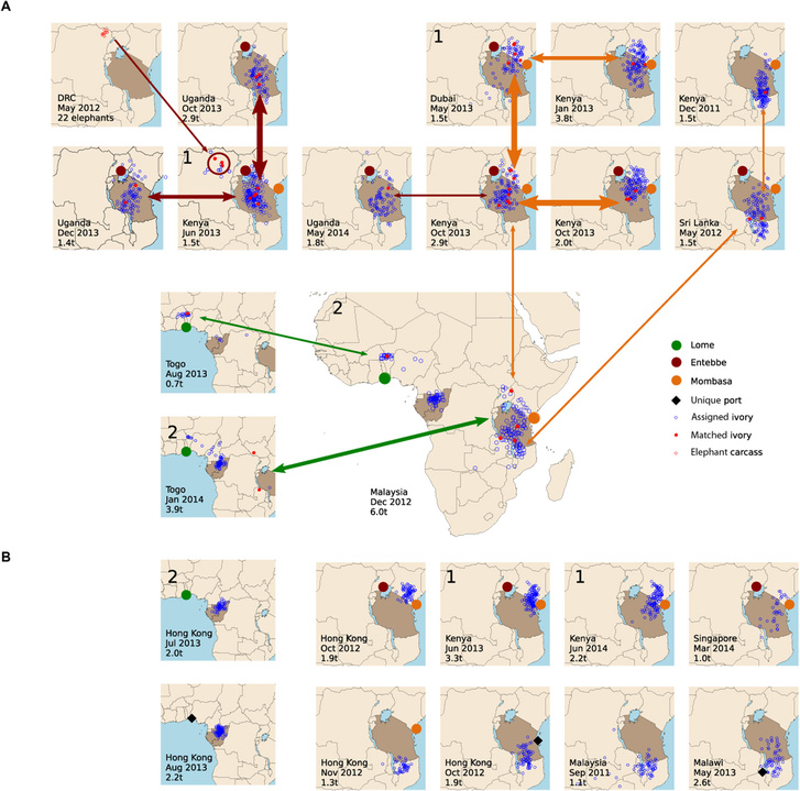 A genetikailag egyező elefántcsontminták származási helyei
